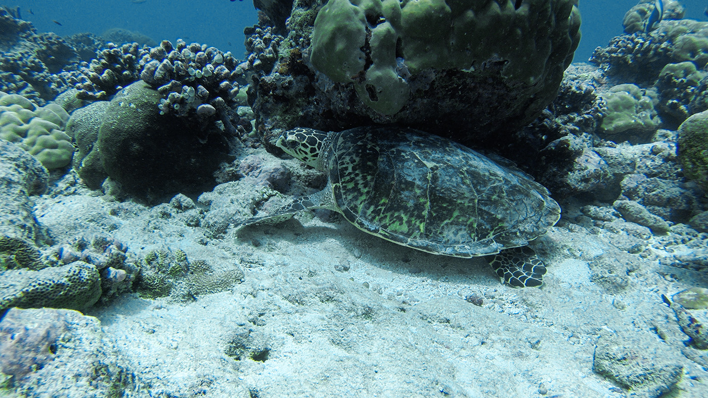 conrad rangali island maldives travel diary