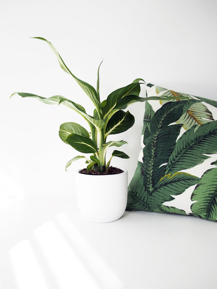 fiddle leaf tree home decor badlands blog